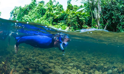 Freshwater snorkelling mossman gorge