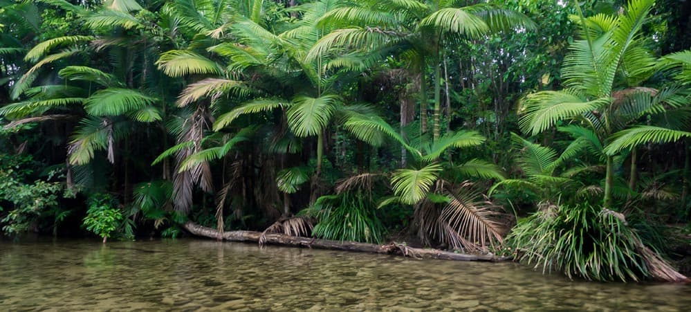 Mossman River Back Country Bliss Adventures