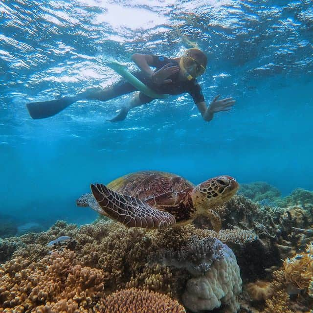 Sailaway Port Douglas - snorkelling with sea turtle on the Great Barrier Reef