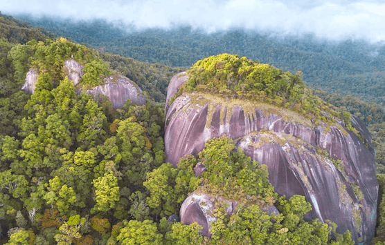 Large rock surrounded by rainforest