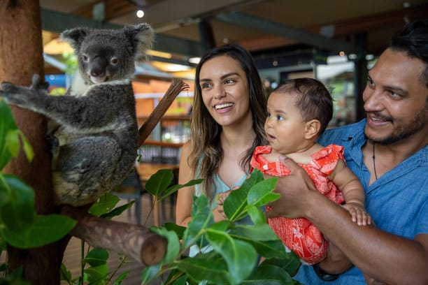 Family with baby looking at koala in wildlife park